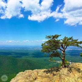 Ravens Roost, Blue Ridge Mountains Virginia