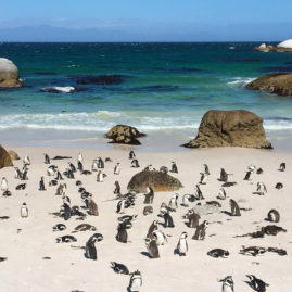 Boulders Beach, South Africa