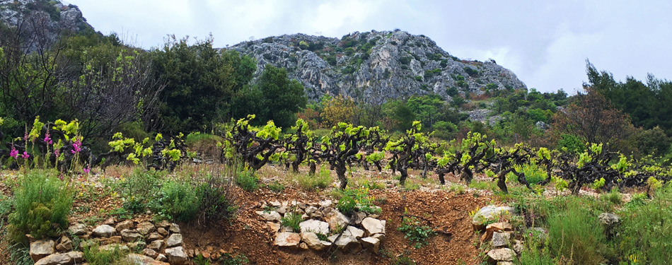 Dubrovnik Vineyards along the Peljesac Peninsula