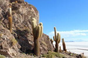 An island of cactus in a sea of salt