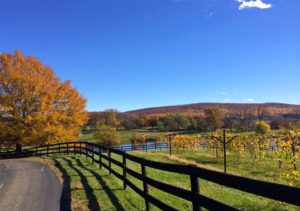 Virginia Wine Country in Autumn
