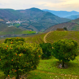Port Wine in Portugal's Douro Valley: Wandering the World's Oldest Wine Region