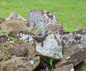 Wildlife at Panama Viejo