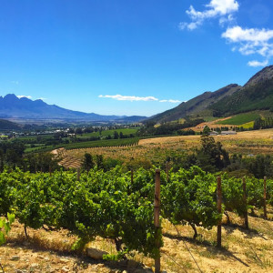 The South African Wine Valleys