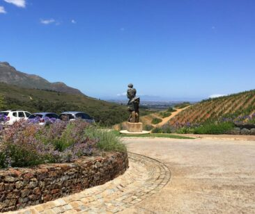 South Africa Winery and Vineyards