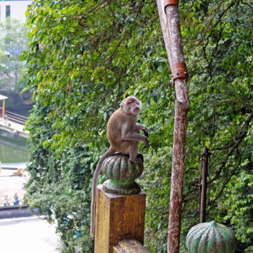 Monkey at the Batu Caves