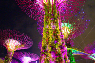 Singapore Supertree Grove at night