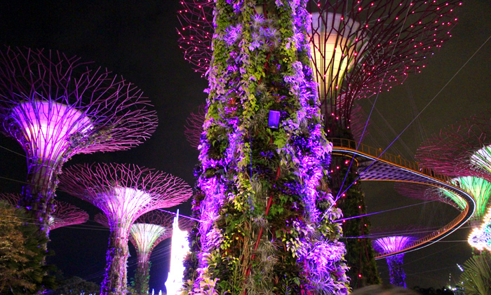 VIDEO: The Supertree Grove