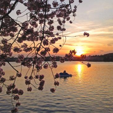 Sunrise on the DC tidal basin