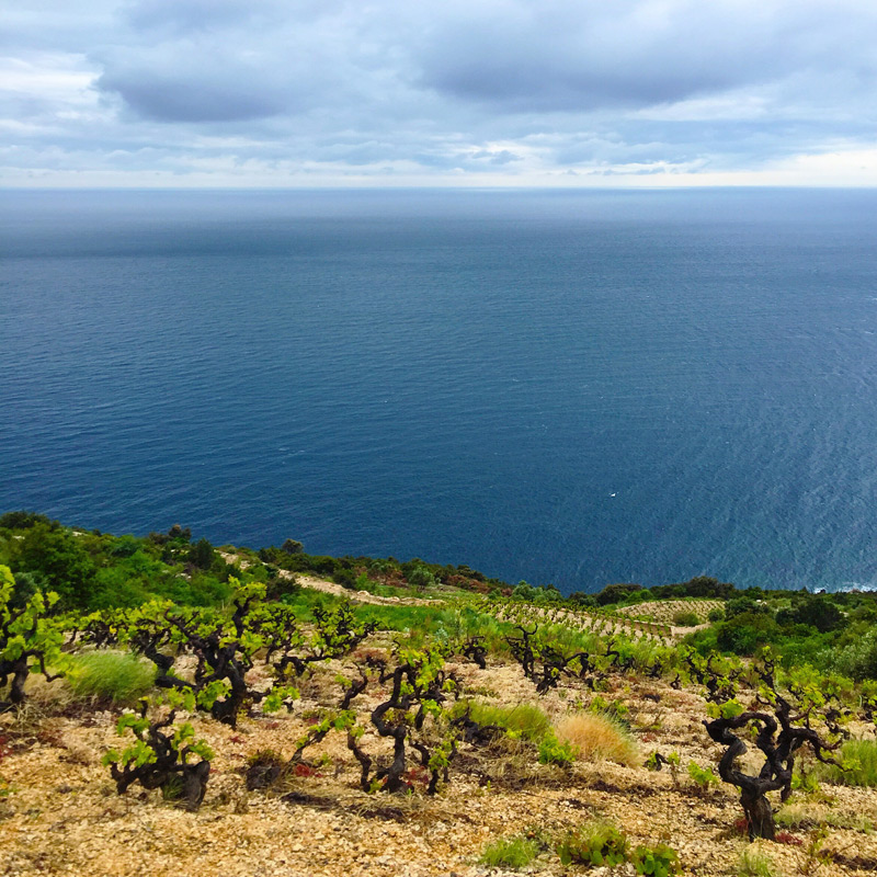 Croatia Wine Region in the Peljesac peninsula
