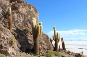 An island of cactus in a sea of salt