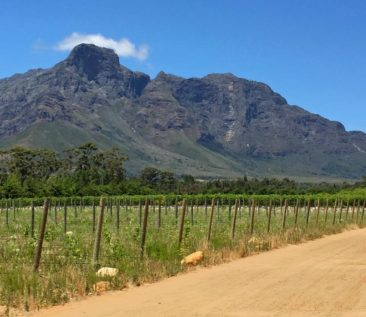 The Franschhoek Valley in South Africa