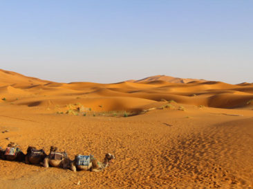 Our camels resting before the trip