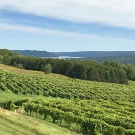 Finger Lakes Wine: A Day in New York's Wine Country