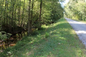Drainage ditch in the Great Dismal Swamp
