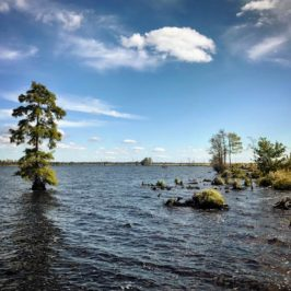 The Great Dismal Swamp of Virginia and North Carolina