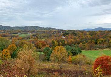 Virginia Foliage
