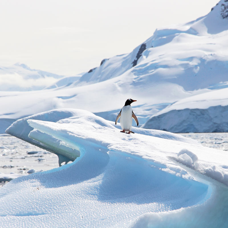 Penguin on an Iceberg