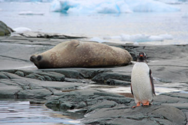 Penguin and Seal in Antarctica