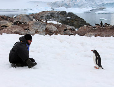 Meet the Antarctica locals!