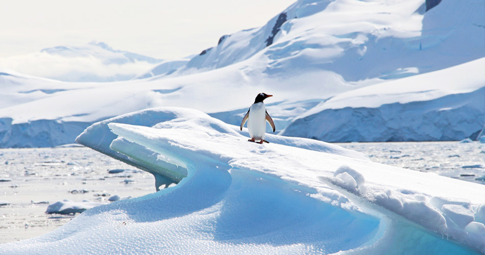 Antarctica: A One Week Expedition Itinerary