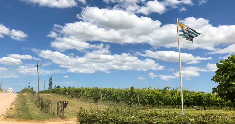 Tasting Tannat: Why You Should Try Uruguay's Famous Wine