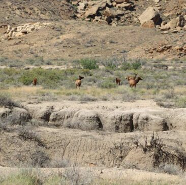 Wildlife in Chaco Canyon