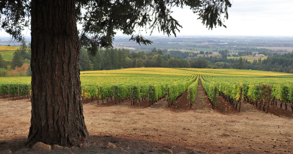 Oregon Wine Country: Pinot Noir in the Willamette Valley