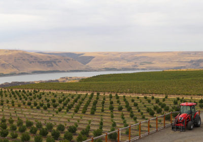 Maryhill Winery in the Columbia River Gorge, Washington