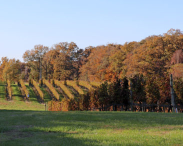 Virginia Vineyards and Foliage