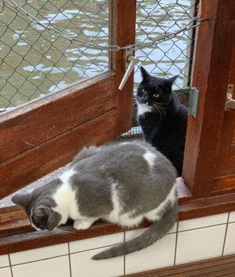 The Catboat residents greeted us during our visit