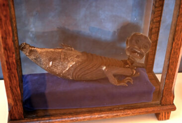 Fiji Merman in the Zwaanendael Museum