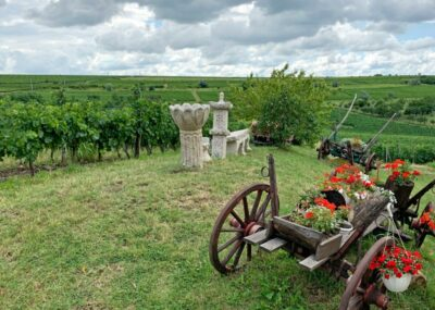 Vineyards in Romanian Wine Country