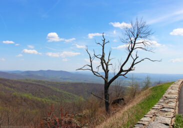 Shenandoah Skyline Drive in Virginia