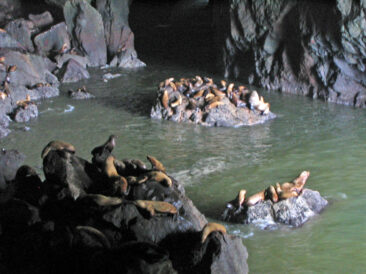 The Sea Lion Caves near Florence, Oregon