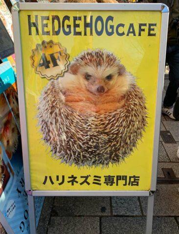 Hedgehog Cafe in Tokyo, Japan