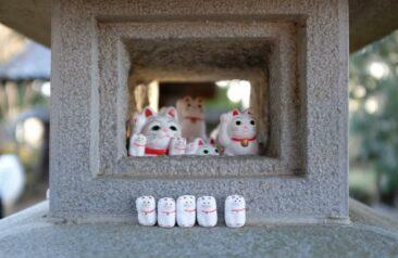Gotokuji Lucky Cat Temple in Tokyo, Japan