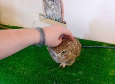 Owl Cafe in Tokyo, Japan