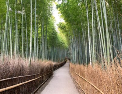 Arashiyama Bamboo Grove in Kyoto, Japan