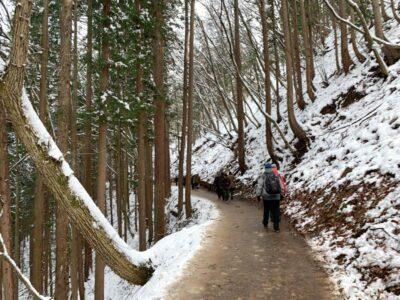 The icy trail to Jigokudani Monkey Park