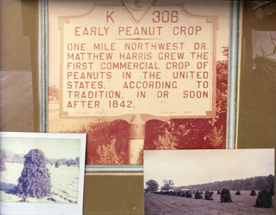 History with the peanut farming process