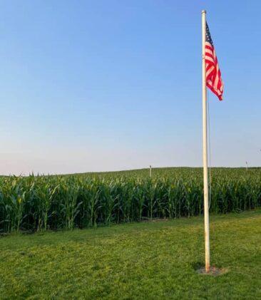 Field of Dreams Cornfields