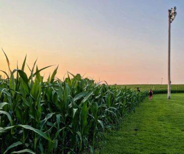 Field of Dreams Sunset